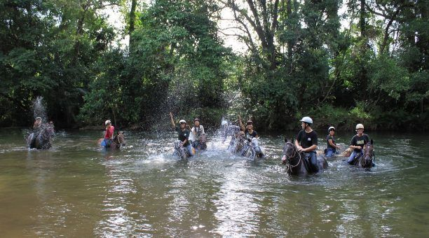 Rainforest Horse Riding