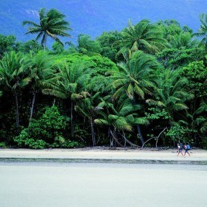 Daintree Rainforest Luxury Tour