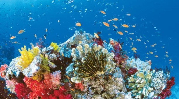 Tropical Fish, Great Barrier Reef