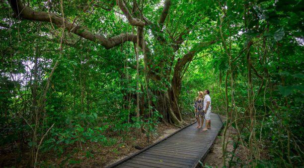 Rainforest Eco Walk